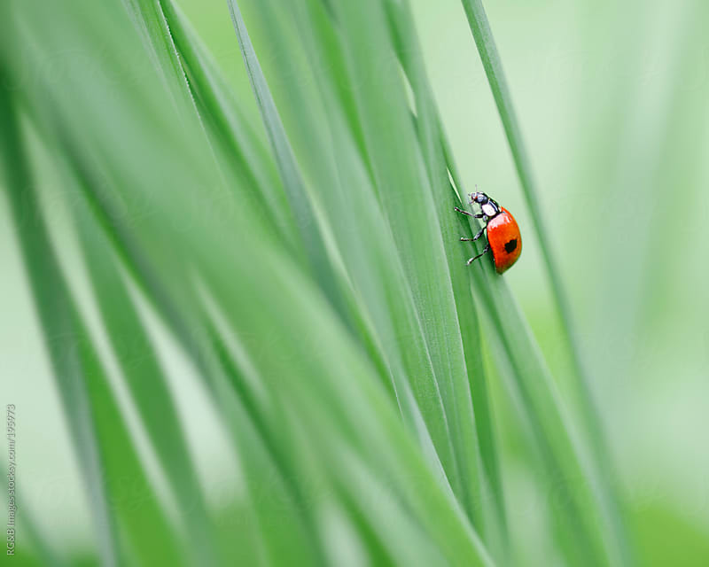 Cute Ladybug by RG&B Images for Stocksy United