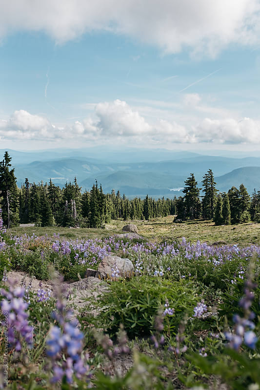 Mt. Hood Meadow by Joe Dodd for Stocksy United