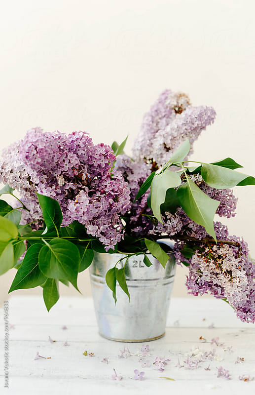 Lilac on the table by Jovana Vukotic for Stocksy United