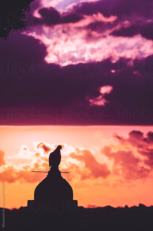 Silhouette of a perched pigeon during dramatic sunrise by Wizemark for Stocksy United