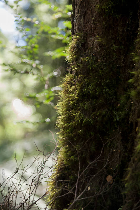 Miniature ferns growing on the side of a tree trunk by Ben Ryan for Stocksy United