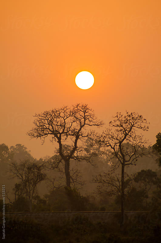 Silhouette of trees at sunset by Saptak Ganguly for Stocksy United