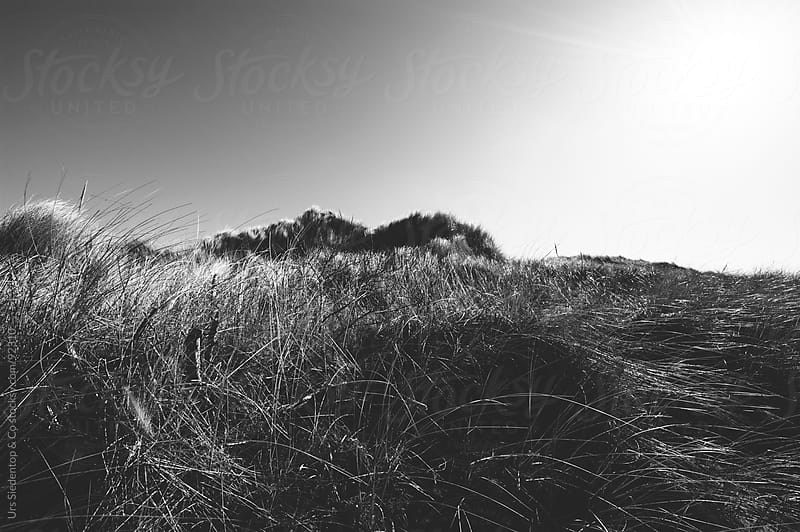 Marram grass dune by Urs Siedentop & Co for Stocksy United