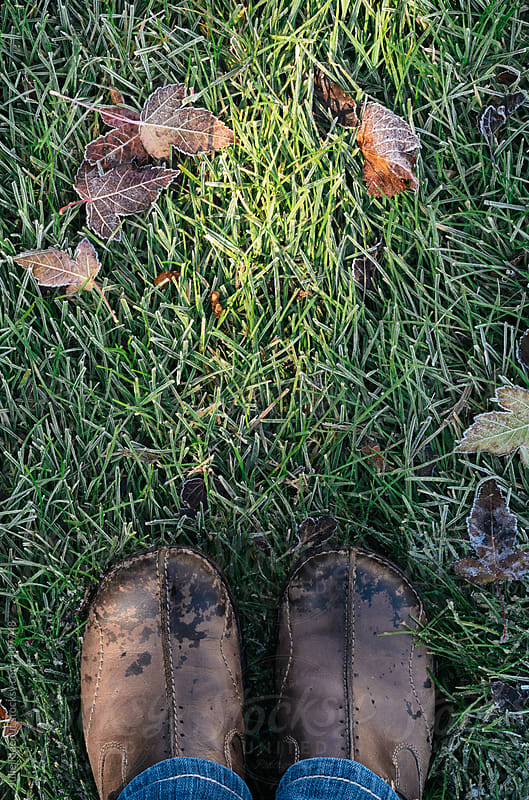 Standing in Frosty Grass by Julie Rideout for Stocksy United