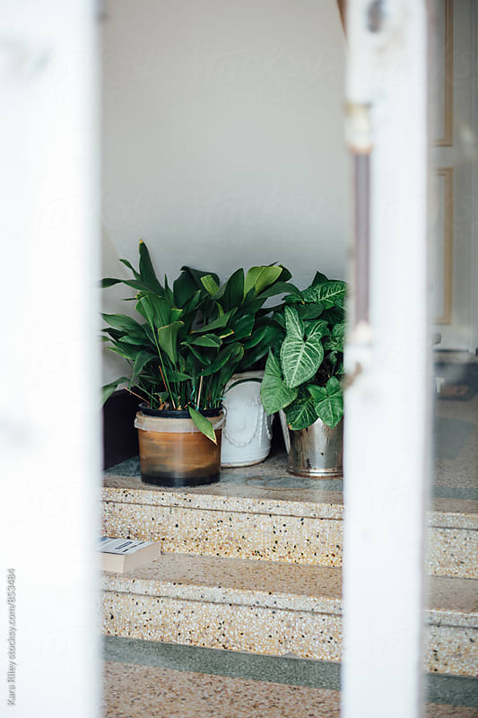Houseplants in apartment building foyer by Kara Riley for Stocksy United
