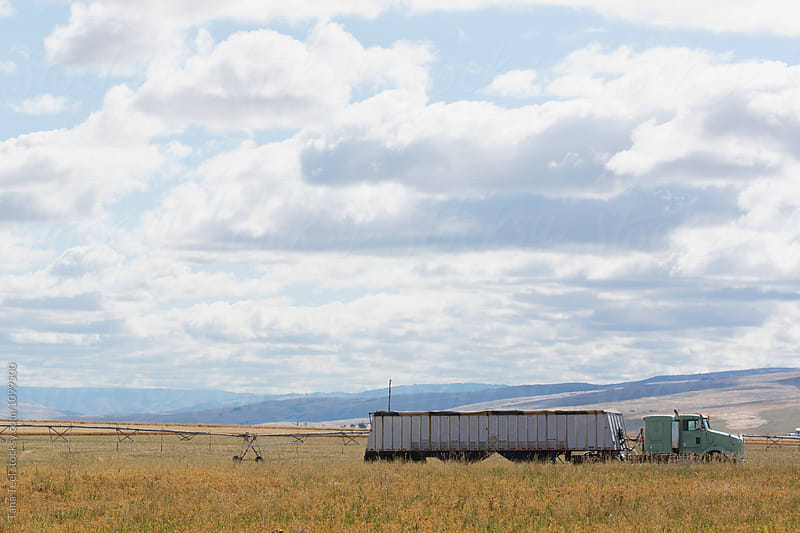 truck carrying dry peas sits in field by Tana Teel for Stocksy United