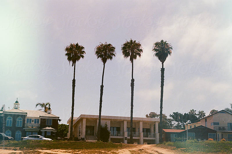 California Palms by Kayla Snell for Stocksy United