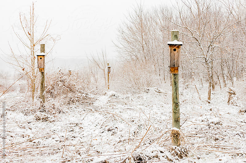 several bird houses in the snow by Deirdre Malfatto for Stocksy United