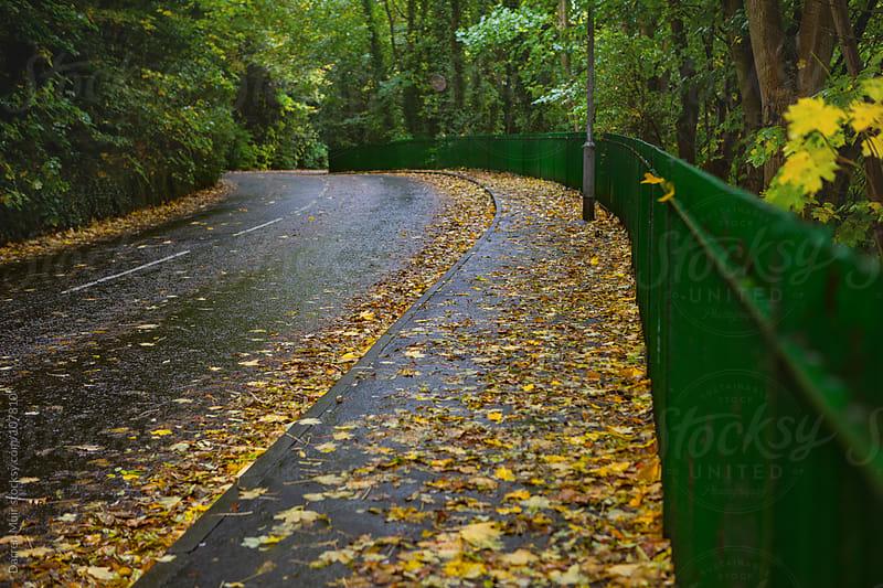 Leafy road in Autumn.  by Darren Muir for Stocksy United