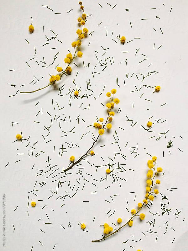 Wild flowers from above by Marija Kovac for Stocksy United
