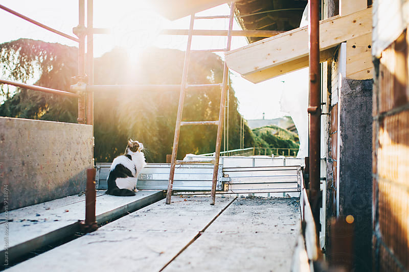 Curious cat sits on scaffolding close to building rooof by Laura Stolfi for Stocksy United