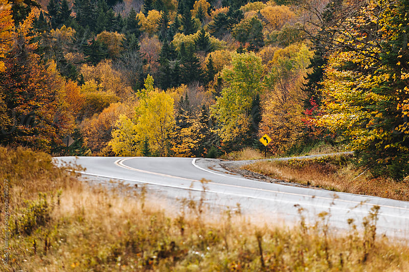 Maine Fall Foliage by Mark Fleming for Stocksy United