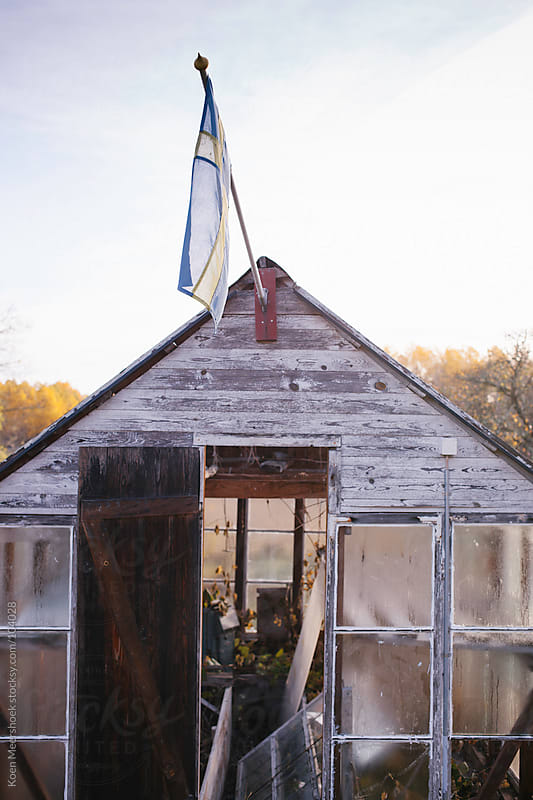 A small abandoned greenhouse with the Swedish flag by Koen Meershoek for Stocksy United
