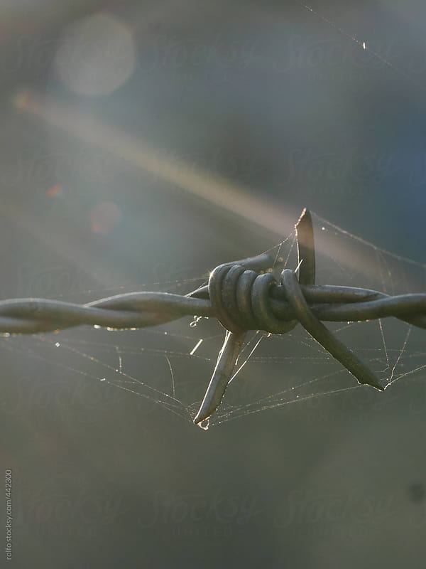 barbed wire by rolfo for Stocksy United