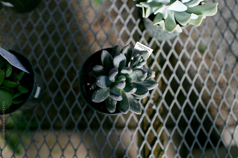 A succulent on a wire rack by Jen Brister for Stocksy United