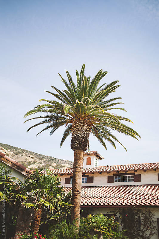 palm tree by Nate & Amanda Howard for Stocksy United