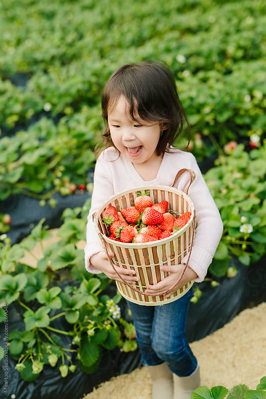 Young girl holding basket of strawberry in greenhouse by Maa Hoo for Stocksy United