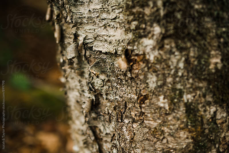 Detail of tree bark by Isaiah & Taylor Photography for Stocksy United
