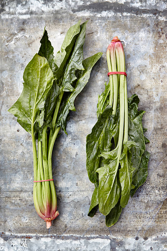 Winter spinach by James Ross for Stocksy United