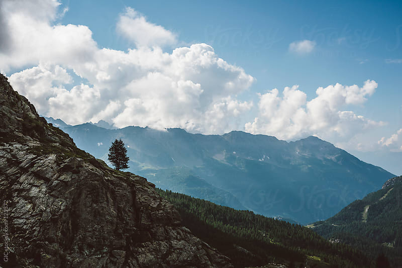 Tree in high mountain by GIC for Stocksy United
