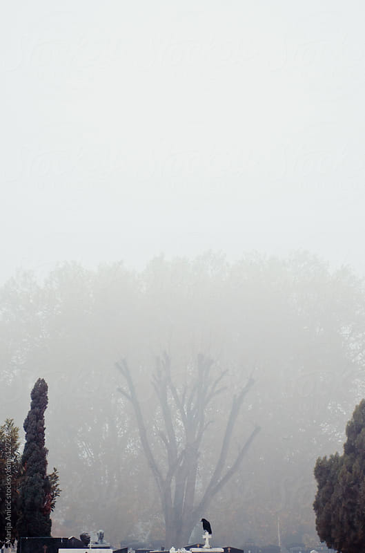 Crow on the grave at the cemetery,fog and cold by Marija Anicic for Stocksy United