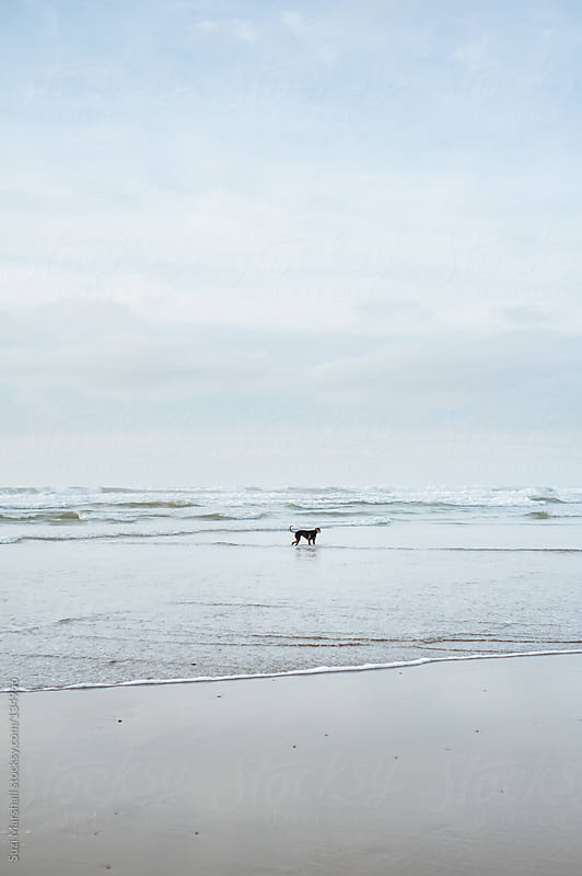 Dog playing in the sea by Suzi Marshall for Stocksy United