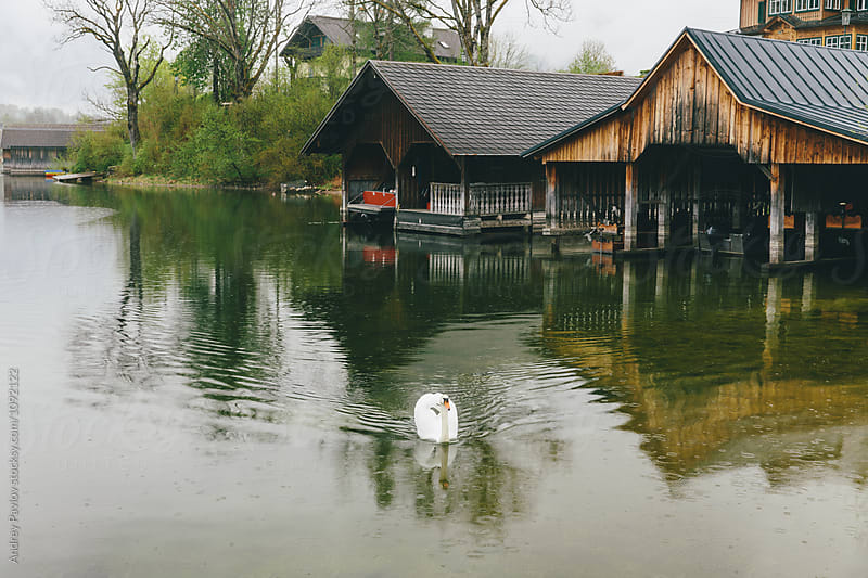 White swan on lake against of buildings by Andrey Pavlov for Stocksy United