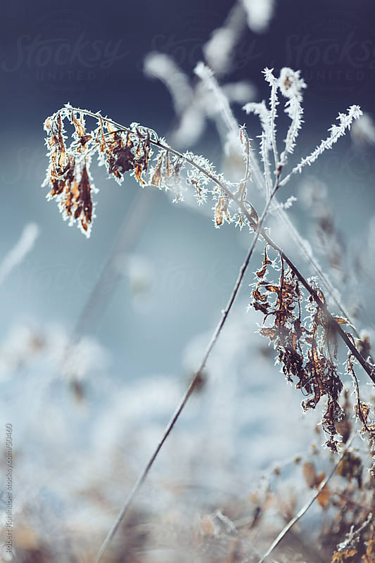 Frozen winter nature by Robert Kohlhuber for Stocksy United