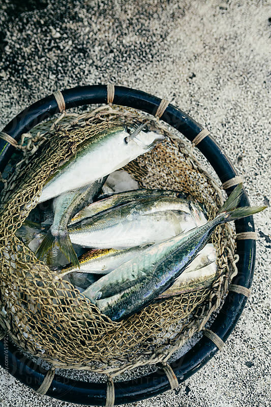 Freshly caught mackerel in a fishing net by kkgas for Stocksy United