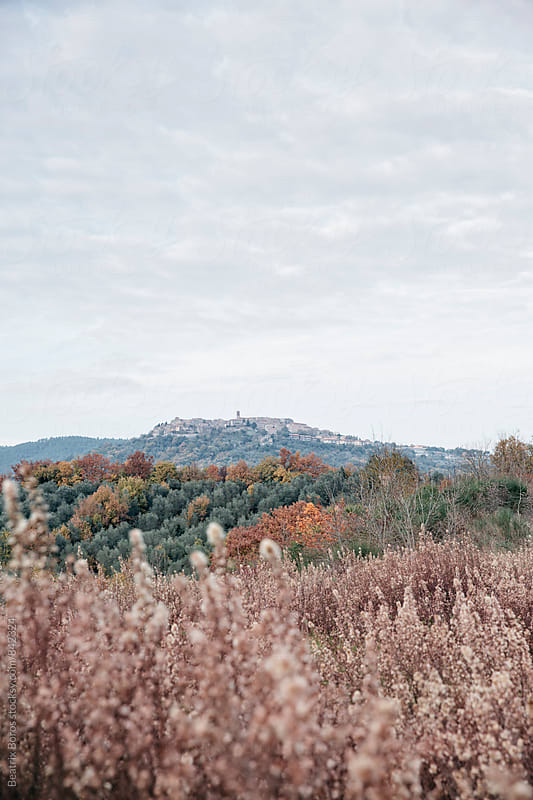 Tuscan countryside in Fall by Beatrix Boros for Stocksy United