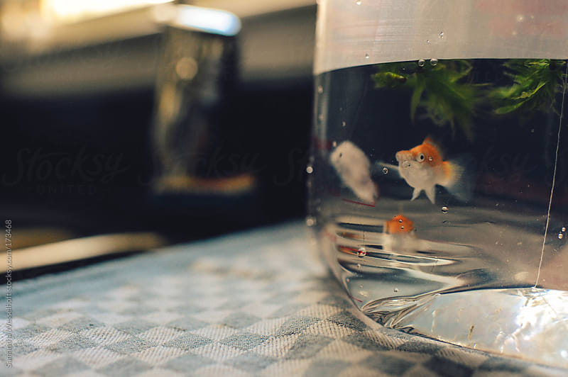 new fish for the aquarium by Samantha Wesselhoft for Stocksy United