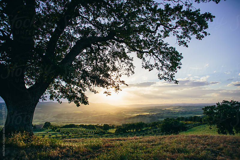 Tuscan landscape with a tree by michela ravasio for Stocksy United