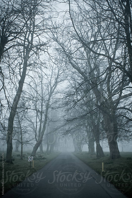 Treed in the fog by Milena Milani for Stocksy United