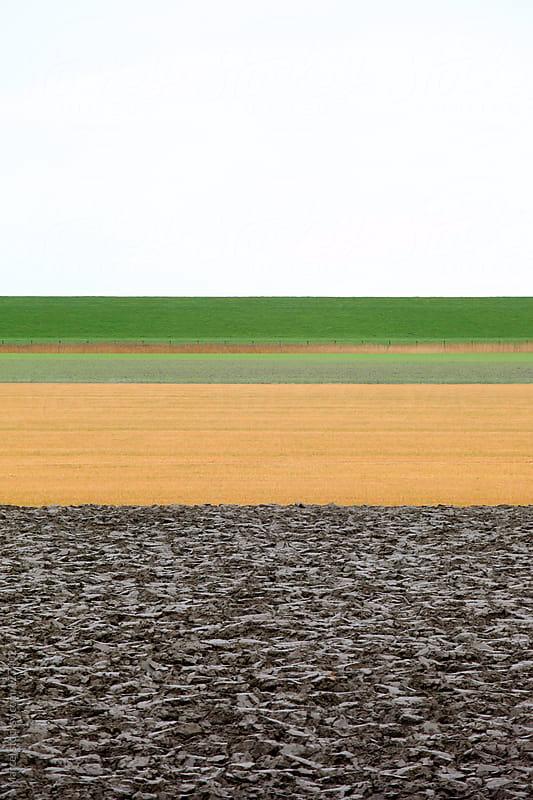 Dutch flat farmland in winter by Marcel for Stocksy United