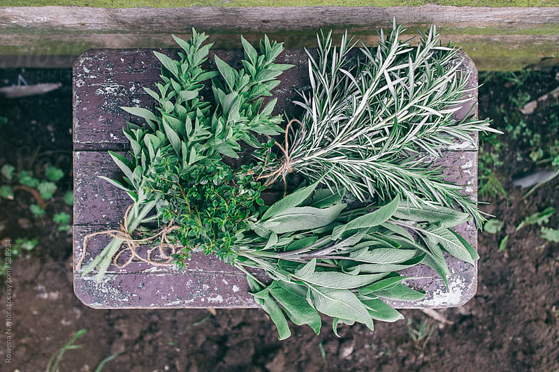 Fresh herb bunches by Rowena Naylor for Stocksy United