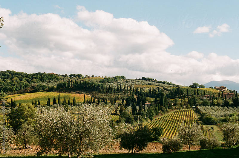 View of fields of Tuscany by Lyuba Burakova for Stocksy United