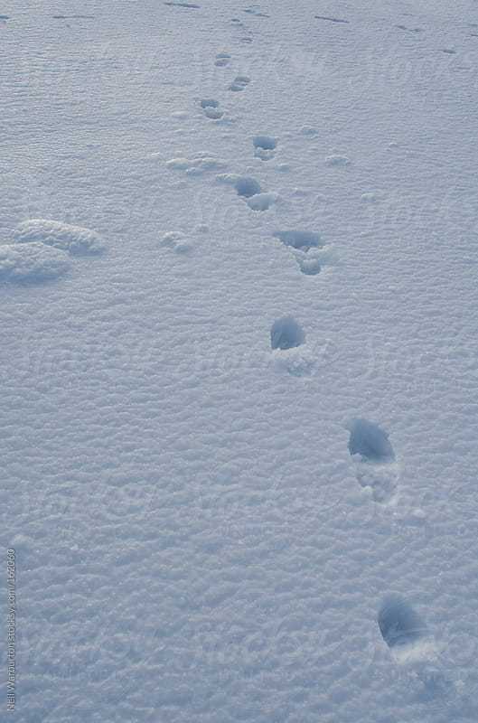 Footprints in the Snow by Neil Warburton for Stocksy United