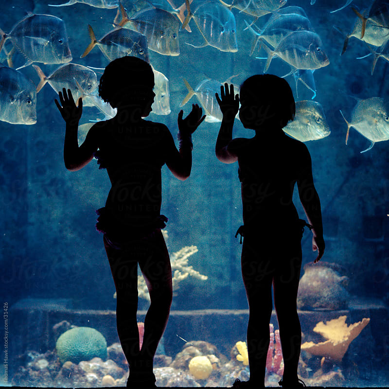 Kids watching aquarium by Thomas Hawk for Stocksy United