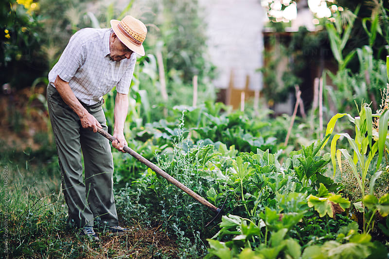 Senior man gardening by Nasos Zovoilis for Stocksy United