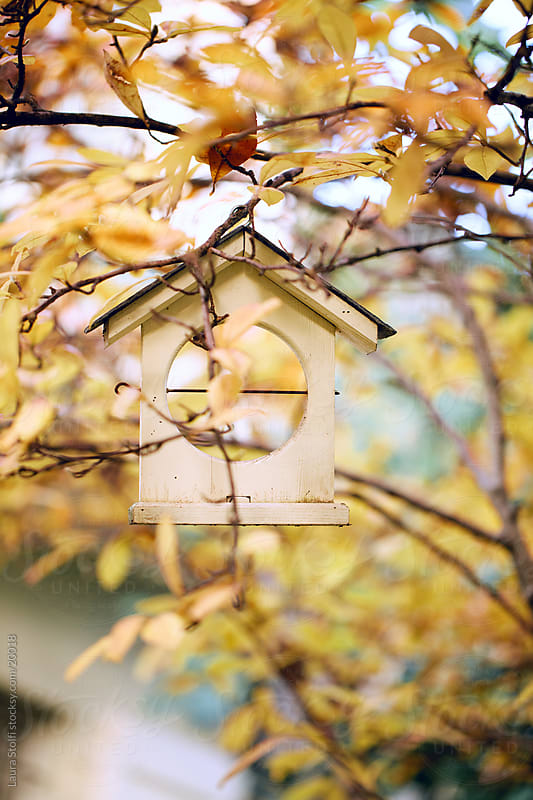 Wooden house shaped birds feeder hanging from tree amongst yellow leaves by Laura Stolfi for Stocksy United