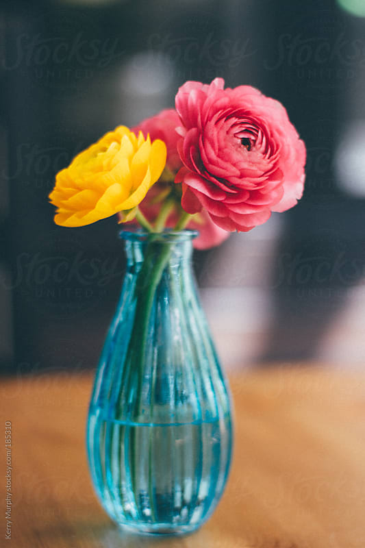 Soft Pink and Yellow Ranunculus flowers in blue vase by Kerry Murphy for Stocksy United