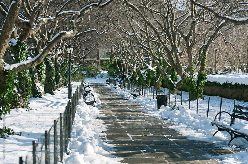 Snow covered park benches in Central Park in New York City. by Gabriel Diaz for Stocksy United
