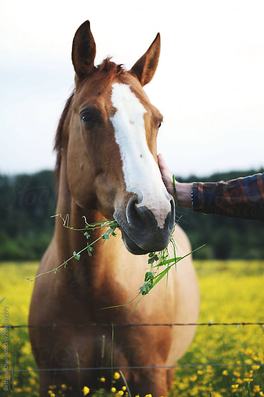 Horse in the Meadow by Bethany Olson for Stocksy United
