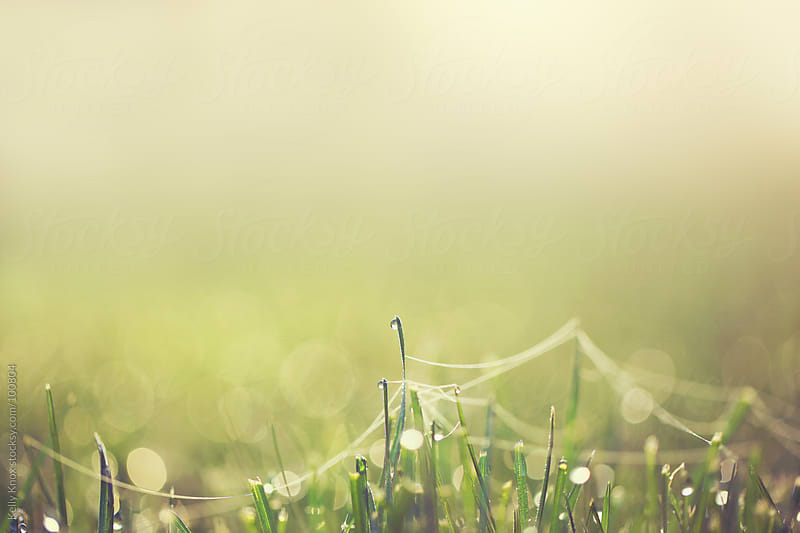 grass in the morning  by Kelly Knox for Stocksy United