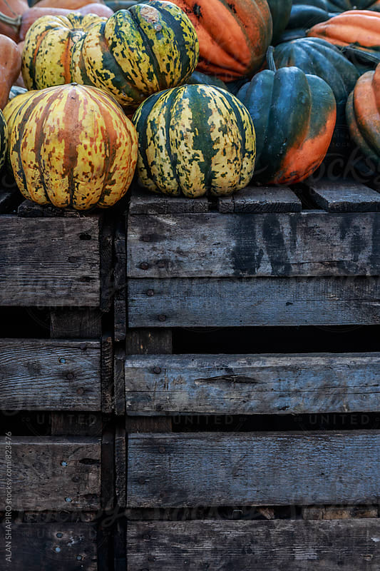squash on pallets by ALAN SHAPIRO for Stocksy United