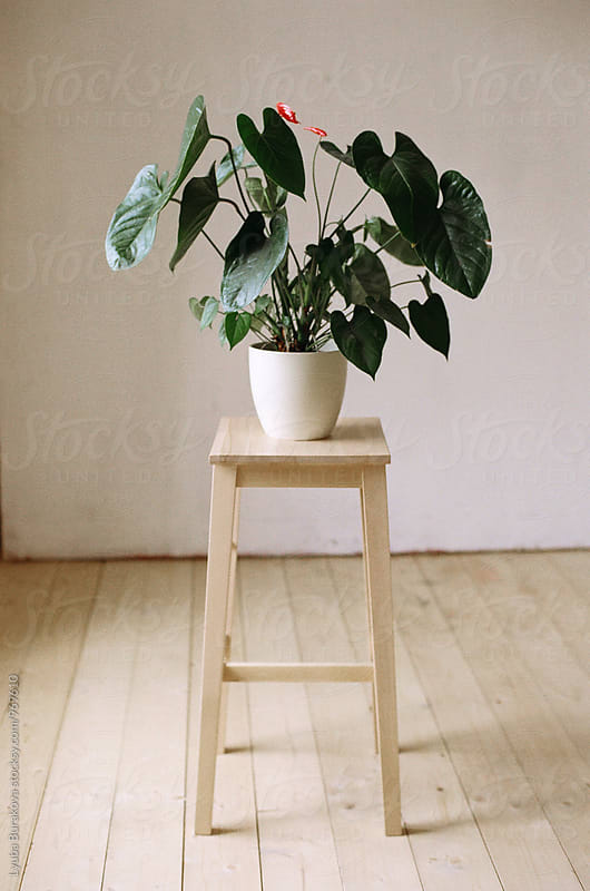 Plant on a stool by Lyuba Burakova for Stocksy United