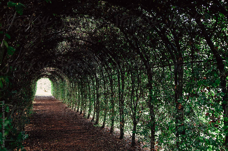 the light at the end of a tunel made of vines  by Sarah Lalone for Stocksy United