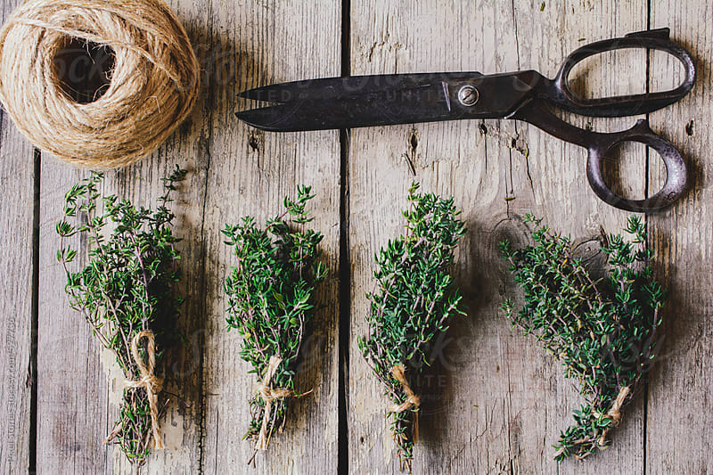 Preparing thyme herb bundles on wooden table by Pixel Stories for Stocksy United