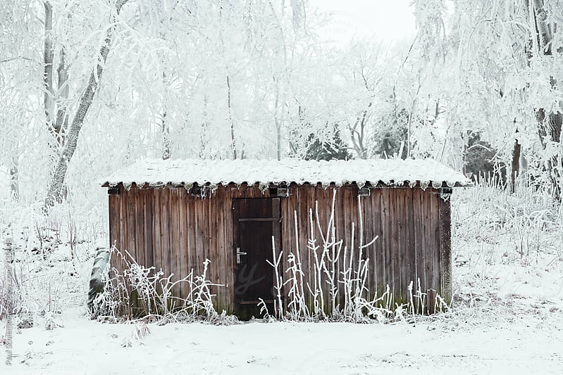 woodshack in a winter forest by Paul Schlemmer for Stocksy United