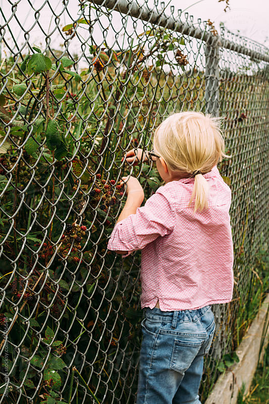 Girl picking wild berries by Jess Lewis for Stocksy United
